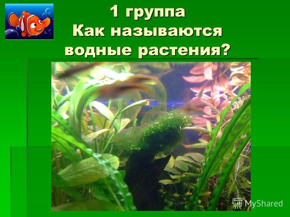 1 группа Как называются водные растения?