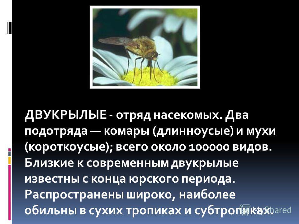 ДВУКРЫЛЫЕ - отряд насекомых. Два подотряда комары (длинноусые) и мухи (короткоусые); всего около 100000 видов. Близкие к современным двукрылые известны с конца юрского периода. Распространены широко, наиболее обильны в сухих тропиках и субтропиках.
