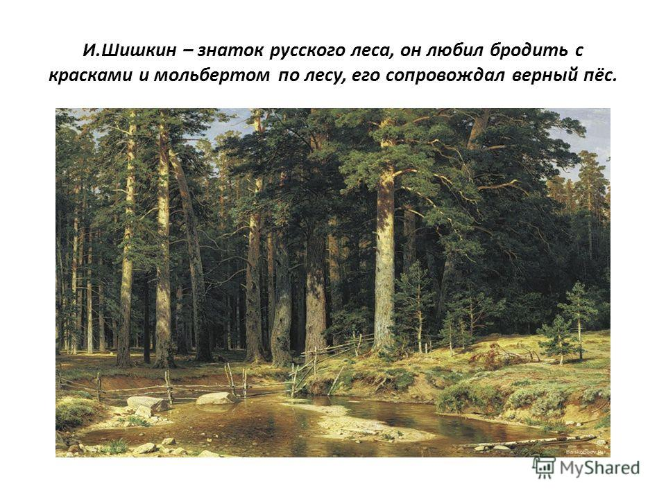 И.Шишкин – знаток русского леса, он любил бродить с красками и мольбертом по лесу, его сопровождал верный пёс.