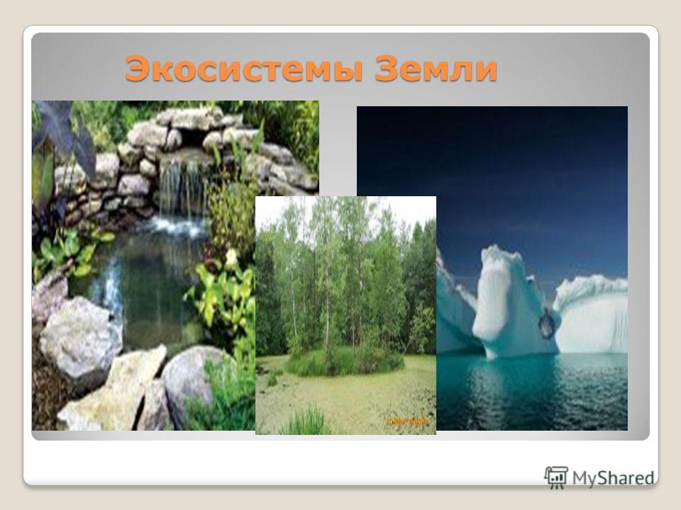 Экосистемы Земли Экосистемы Земли