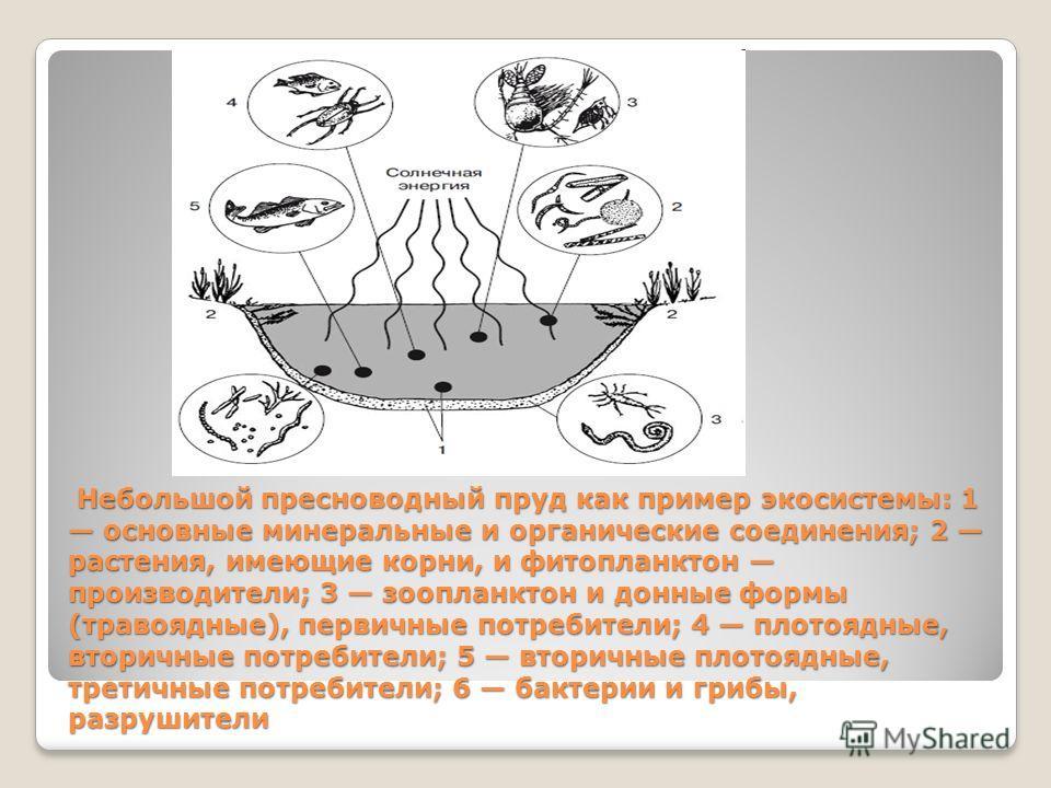 Небольшой пресноводный пруд как пример экосистемы: 1 основные минеральные и органические соединения; 2 растения, имеющие корни, и фитопланктон производители; 3 зоопланктон и донные формы (травоядные), первичные потребители; 4 плотоядные, вторичные по