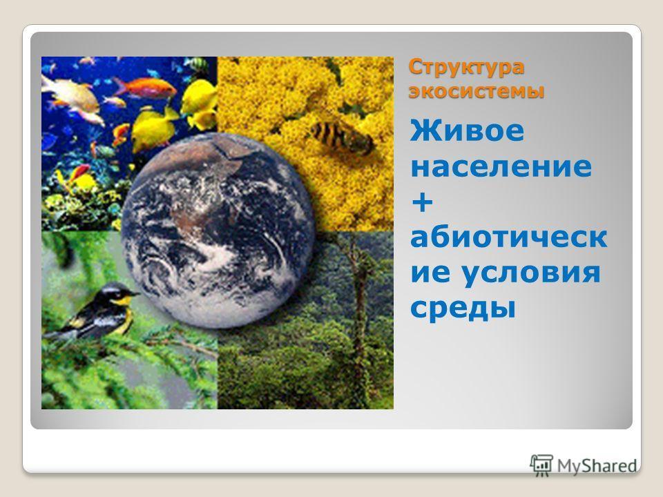 Структура экосистемы Живое население + абиотическ ие условия среды