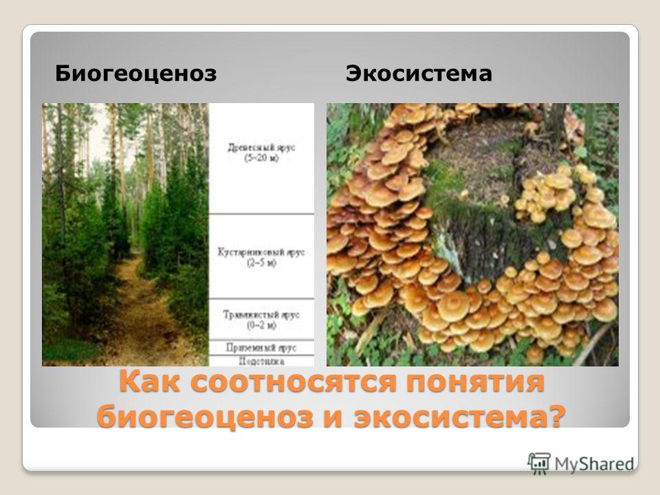 Как соотносятся понятия биогеоценоз и экосистема? БиогеоценозЭкосистема