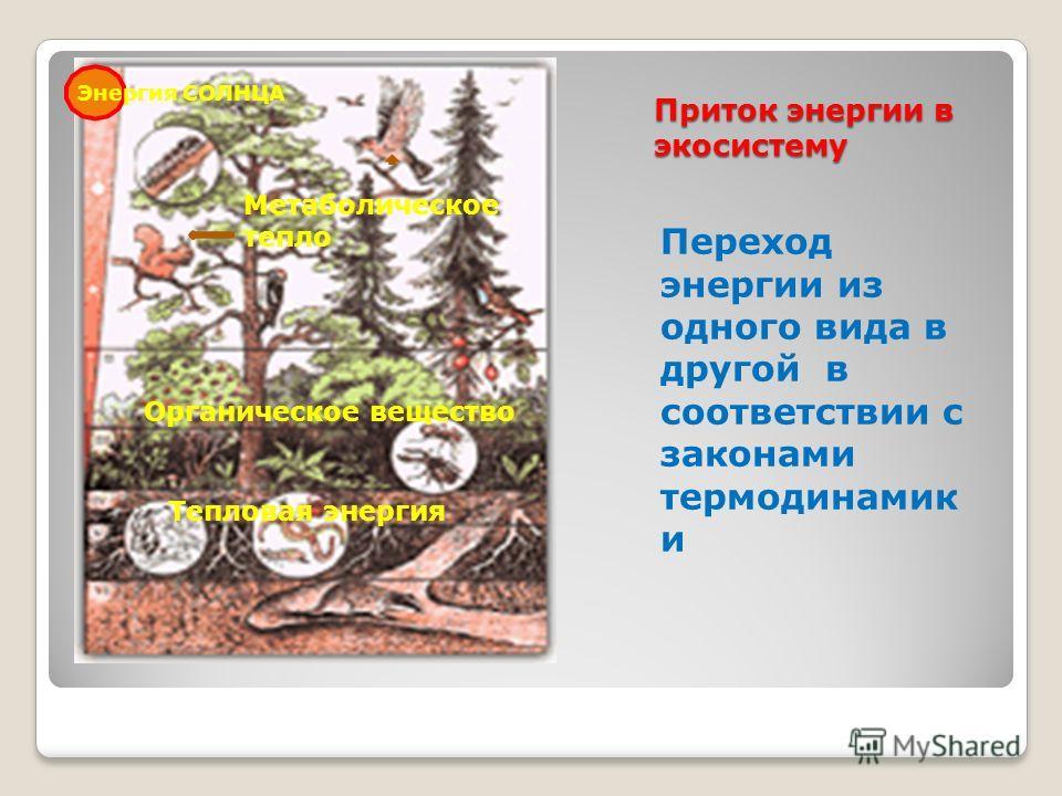 Приток энергии в экосистему Переход энергии из одного вида в другой в соответствии с законами термодинамик и Энергия СОЛНЦА Органическое вещество Тепловая энергия Метаболическое тепло
