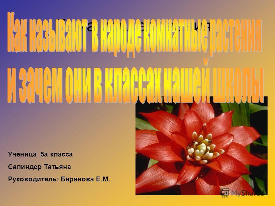 Тема исследования Ученица 5а класса Салиндер Татьяна Руководитель: Баранова Е.М.