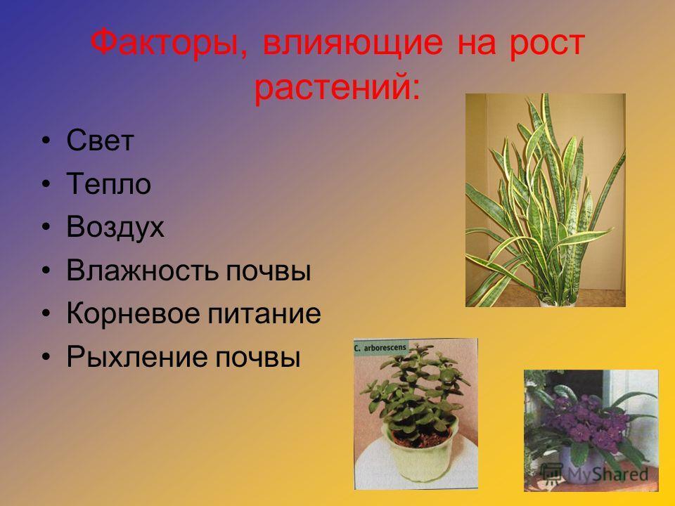 Факторы, влияющие на рост растений: Свет Тепло Воздух Влажность почвы Корневое питание Рыхление почвы