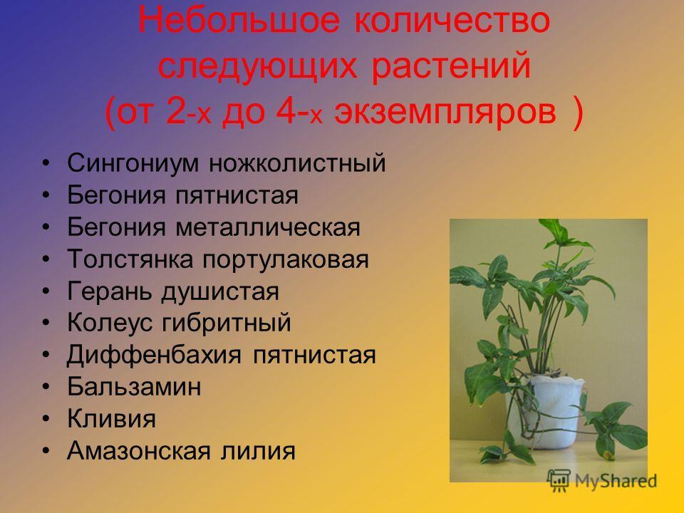 Небольшое количество следующих растений (от 2 -х до 4- х экземпляров ) Сингониум ножколистный Бегония пятнистая Бегония металлическая Толстянка портулаковая Герань душистая Колеус гибритный Диффенбахия пятнистая Бальзамин Кливия Амазонская лилия