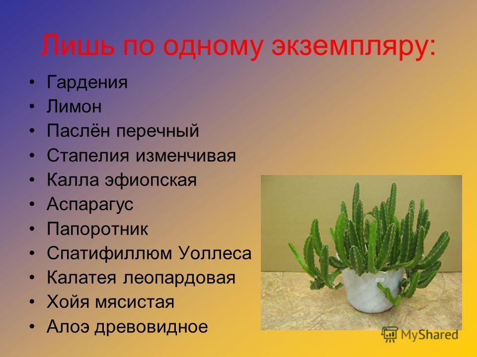 Лишь по одному экземпляру: Гардения Лимон Паслён перечный Стапелия изменчивая Калла эфиопская Аспарагус Папоротник Спатифиллюм Уоллеса Калатея леопардовая Хойя мясистая Алоэ древовидное