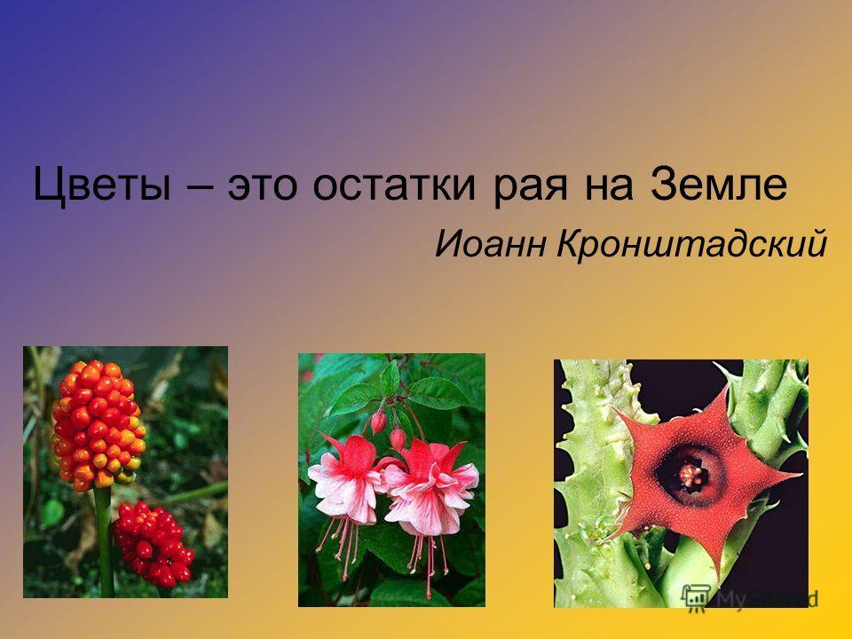 Цветы – это остатки рая на Земле Иоанн Кронштадский