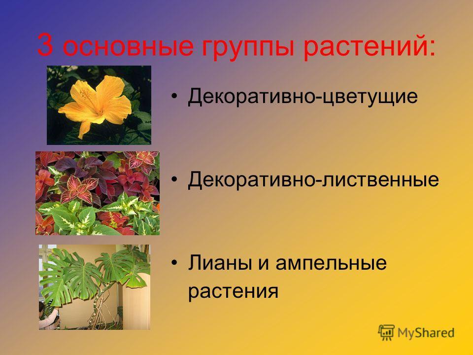 3 основные группы растений: Декоративно-цветущие Декоративно-лиственные Лианы и ампельные растения