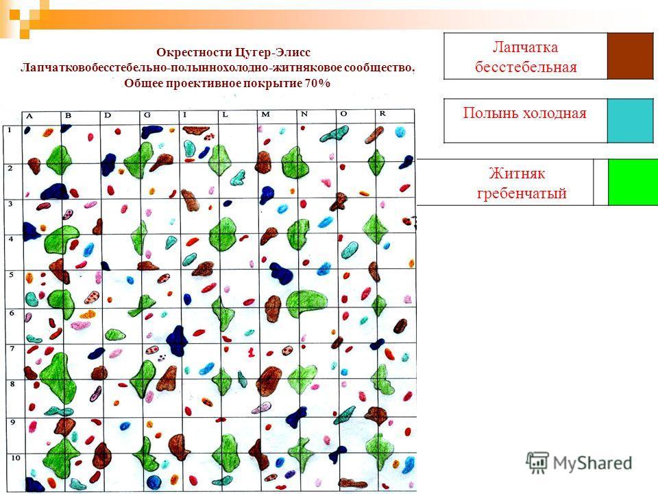 Лапчатка бесстебельная Полынь холодная Житняк гребенчатый Окрестности Цугер-Элисс Лапчатковобесстебельно-полыннохолодно-житняковое сообщество. Общее проективное покрытие 70%