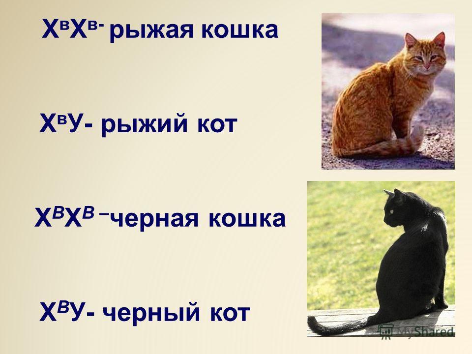 Х в Х в- рыжая кошка Х в У- рыжий кот Х В Х В – черная кошка Х В У- черный кот