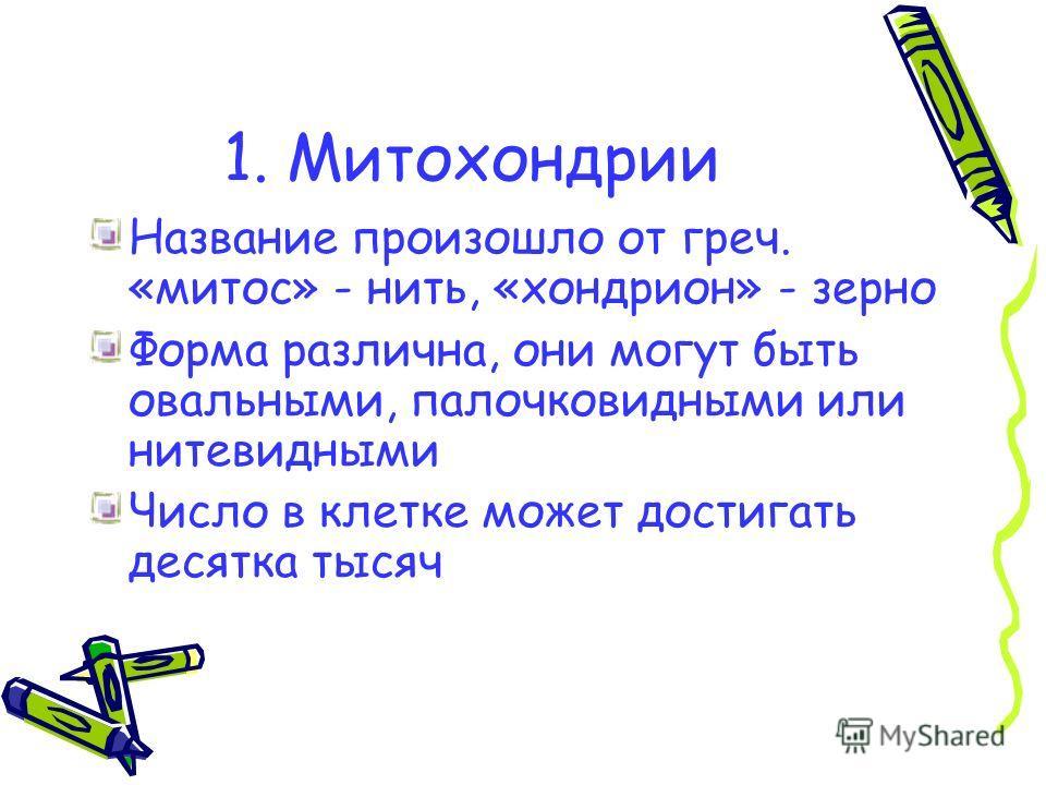 1. Митохондрии Название произошло от греч. «митос» - нить, «хондрион» - зерно Форма различна, они могут быть овальными, палочковидными или нитевидными Число в клетке может достигать десятка тысяч
