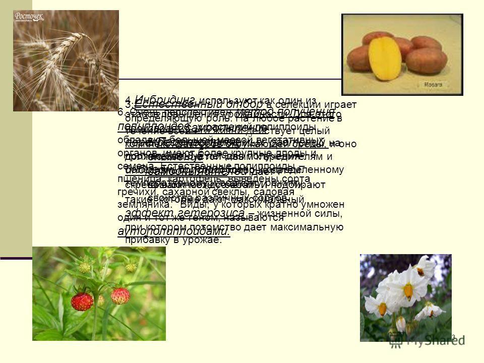 3 3. Естественный отбор в селекции играет определяющую роль. На любое растение в течение всей его жизни действует целый комплекс факторов окружающей среды, и оно должно быть устойчивым к вредителям и болезням, приспособлено к определенному температур