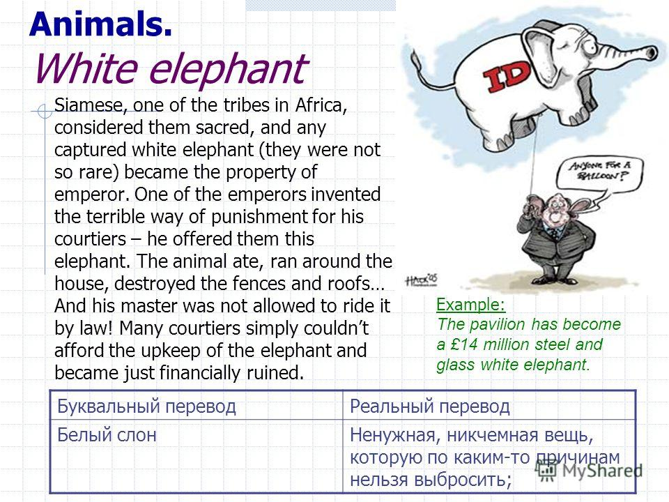 Animals. White elephant Siamese, one of the tribes in Africa, considered them sacred, and any captured white elephant (they were not so rare) became the property of emperor. Оne of the emperors invented the terrible way of punishment for his courtier