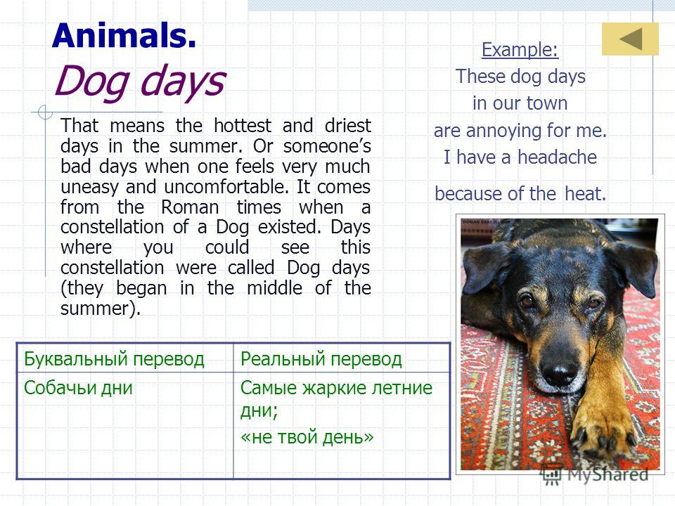 Animals. Dog days That means the hottest and driest days in the summer. Or someones bad days when one feels very much uneasy and uncomfortable. It comes from the Roman times when a constellation of a Dog existed. Days where you could see this constel
