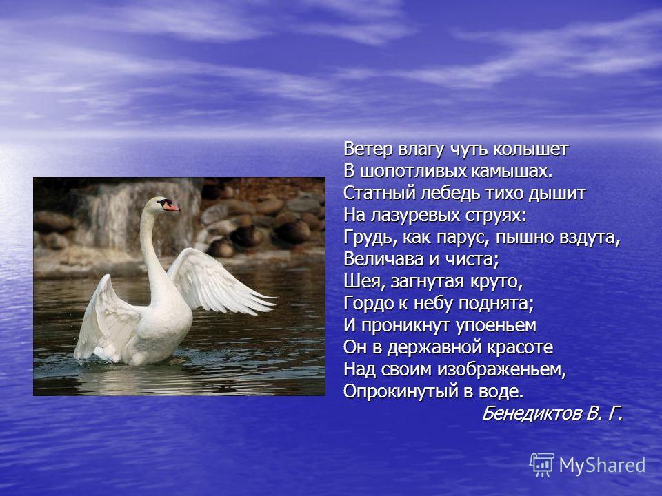 Ветер влагу чуть колышет В шопотливых камышах. Статный лебедь тихо дышит На лазуревых струях: Грудь, как парус, пышно вздута, Величава и чиста; Шея, загнутая круто, Гордо к небу поднята; И проникнут упоеньем Он в державной красоте Над своим изображен