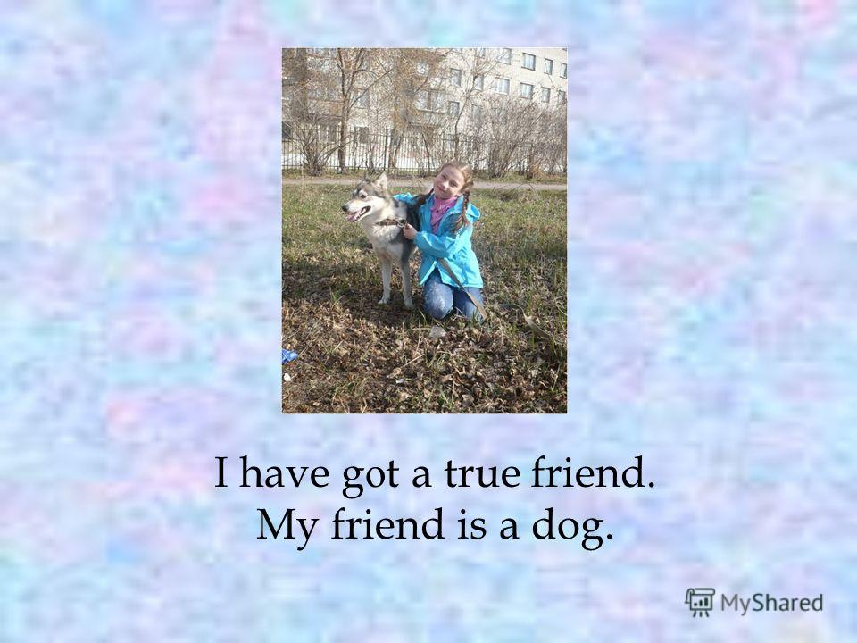 I have g о t a true friend. My friend is a dog.