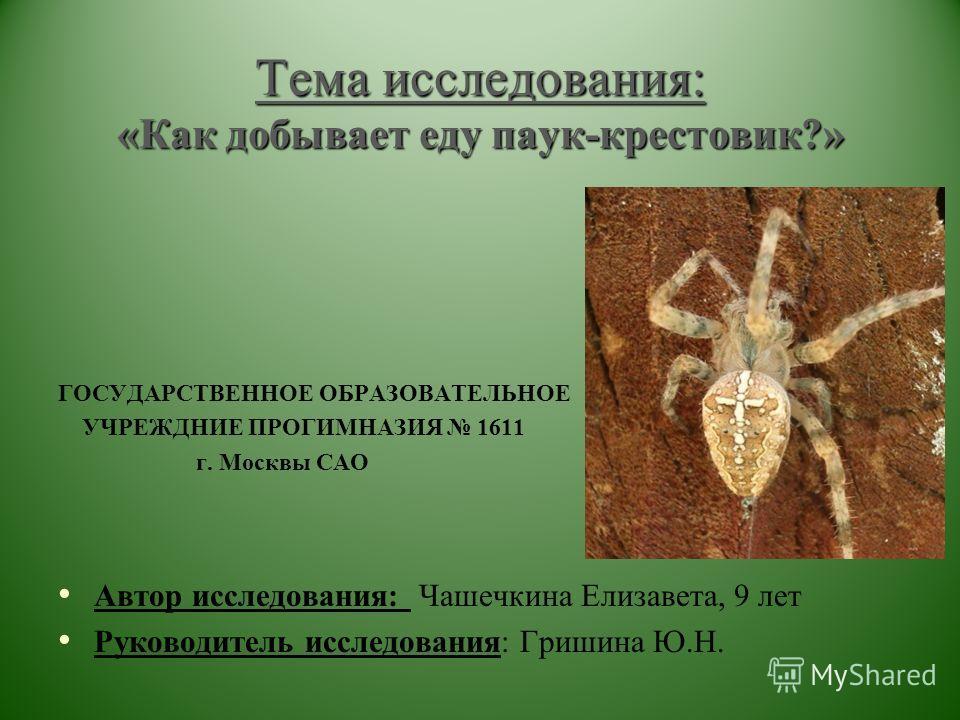 Тема исследования: «Как добывает еду паук-крестовик?» Тема исследования: «Как добывает еду паук-крестовик?» ГОСУДАРСТВЕННОЕ ОБРАЗОВАТЕЛЬНОЕ УЧРЕЖДНИЕ ПРОГИМНАЗИЯ 1611 г. Москвы САО Автор исследования: Чашечкина Елизавета, 9 лет Руководитель исследова
