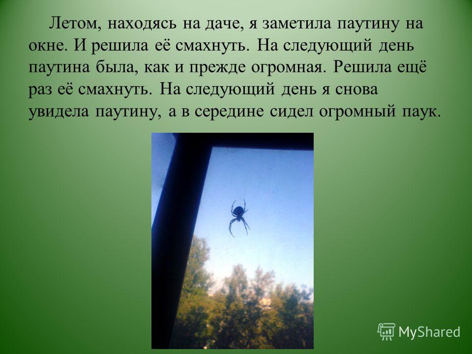 Летом, находясь на даче, я заметила паутину на окне. И решила её смахнуть. На следующий день паутина была, как и прежде огромная. Решила ещё раз её смахнуть. На следующий день я снова увидела паутину, а в середине сидел огромный паук.