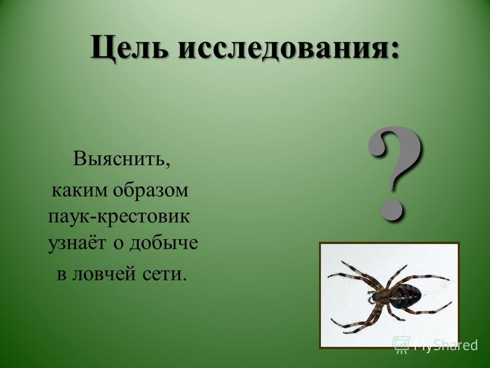Цель исследования: Выяснить, каким образом паук-крестовик узнаёт о добыче в ловчей сети. ?