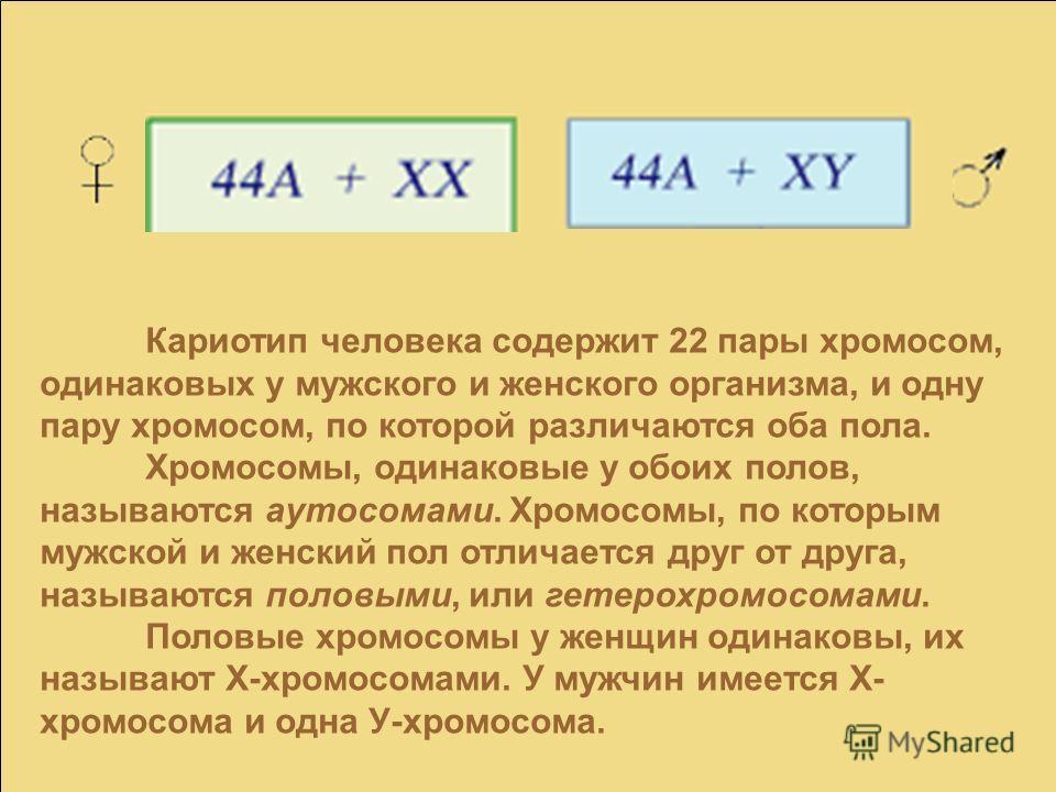 Кариотип человека содержит 22 пары хромосом, одинаковых у мужского и женского организма, и одну пару хромосом, по которой различаются оба пола. Хромосомы, одинаковые у обоих полов, называются аутосомами. Хромосомы, по которым мужской и женский пол от