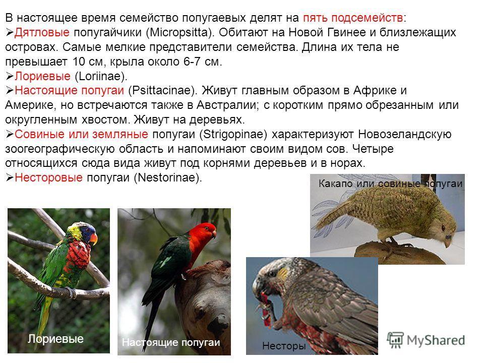 В настоящее время семейство попугаевых делят на пять подсемейств: Дятловые попугайчики (Micropsitta). Обитают на Новой Гвинее и близлежащих островах. Самые мелкие представители семейства. Длина их тела не превышает 10 см, крыла около 6-7 см. Лориевые