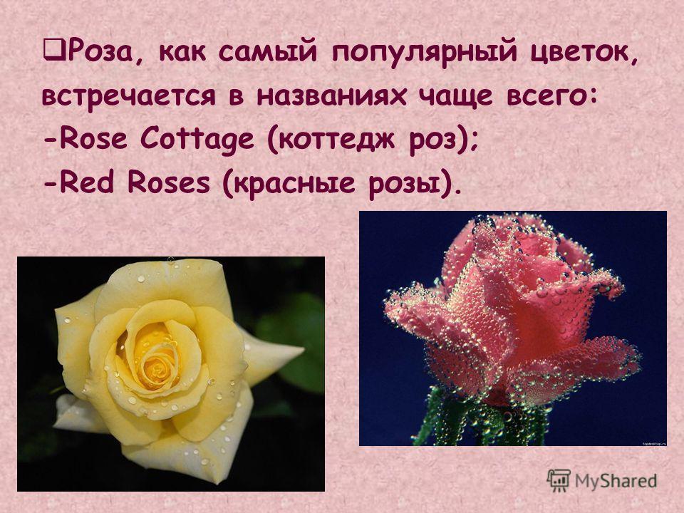 Роза, как самый популярный цветок, встречается в названиях чаще всего: -Rose Cottage (коттедж роз); -Red Roses (красные розы).