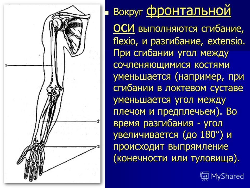 Вокруг фронтальной оси выполняются сгибание, flexio, и разгибание, extensio. При сгибании угол между сочленяющимися костями уменьшается (например, при сгибании в локтевом суставе уменьшается угол между плечом и предплечьем). Во время разгибания - уго