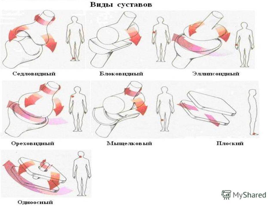 Скачать формы суставов как приготовить корень лопуха для лечения сустав
