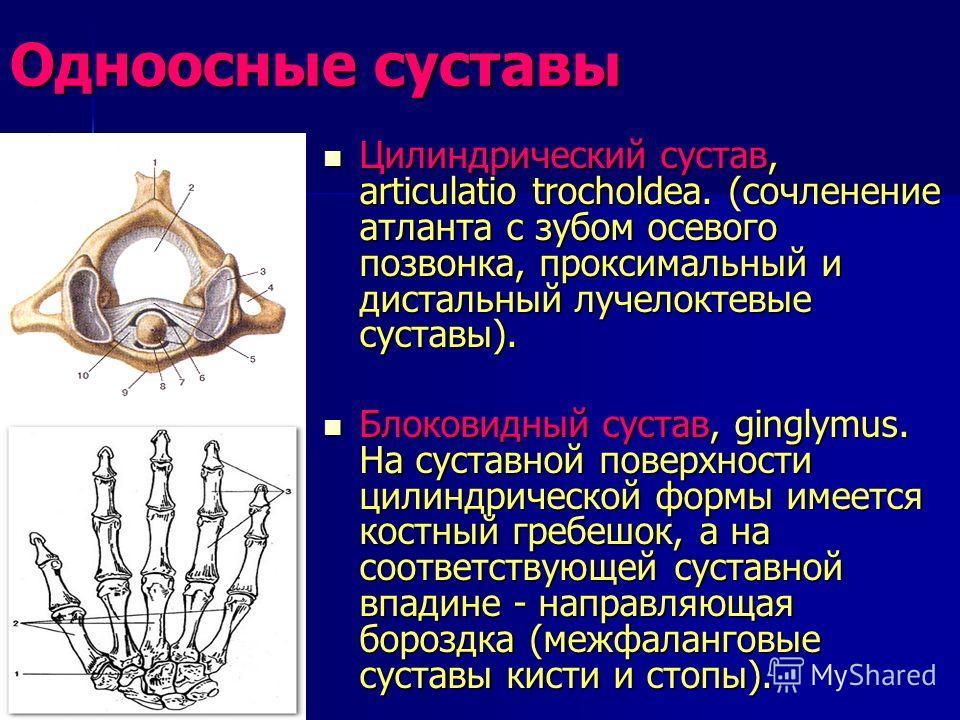 Одноосные суставы Цилиндрический сустав, articulatio trocholdea. (сочленение атланта с зубом осевого позвонка, проксимальный и дистальный лучелоктевые суставы). Цилиндрический сустав, articulatio trocholdea. (сочленение атланта с зубом осевого позвон