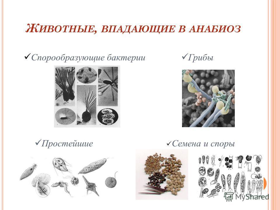 Ж ИВОТНЫЕ, ВПАДАЮЩИЕ В АНАБИОЗ Спорообразующие бактерии Грибы Простейшие Семена и споры