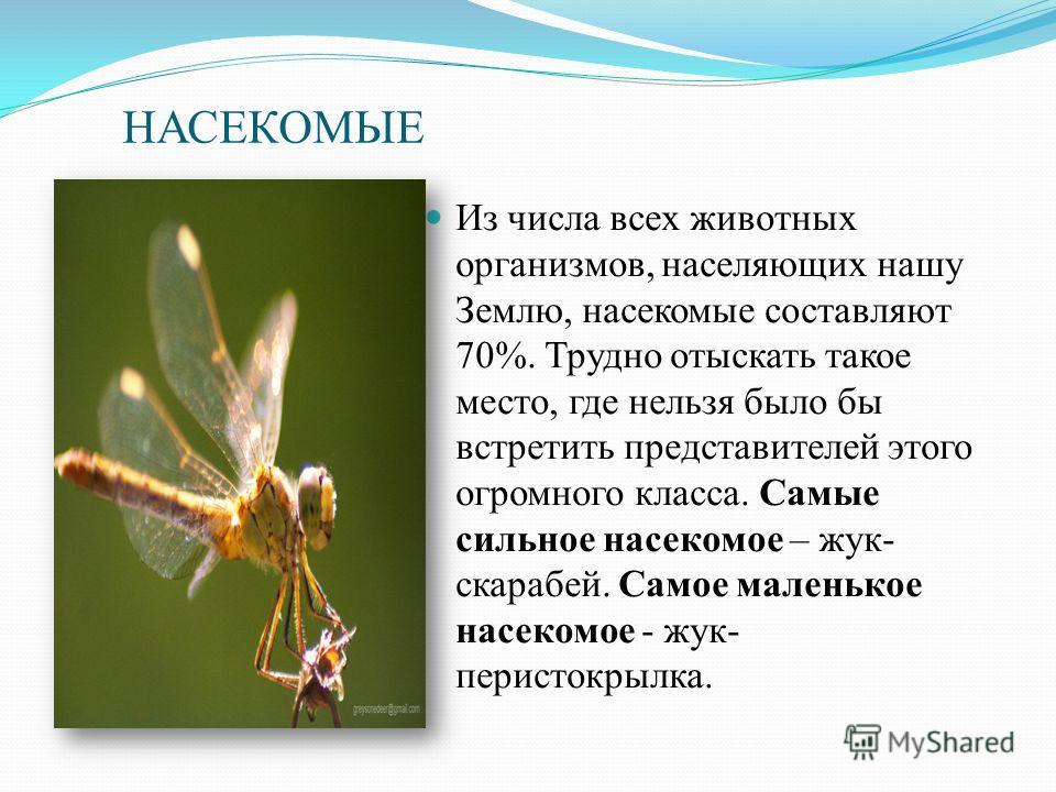 НАСЕКОМЫЕ Из числа всех животных организмов, населяющих нашу Землю, насекомые составляют 70%. Трудно отыскать такое место, где нельзя было бы встретить представителей этого огромного класса. Самые сильное насекомое – жук- скарабей. Самое маленькое на