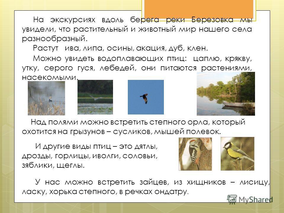 На экскурсиях вдоль берега реки Березовка мы увидели, что растительный и животный мир нашего села разнообразный. Растут ива, липа, осины, акация, дуб, клен. Можно увидеть водоплавающих птиц: цаплю, крякву, утку, серого гуся, лебедей, они питаются рас