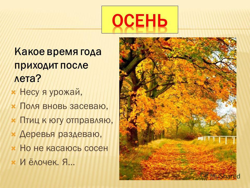 Несу я урожай, Поля вновь засеваю, Птиц к югу отправляю, Деревья раздеваю, Но не касаюсь сосен И ёлочек. Я… Какое время года приходит после лета?