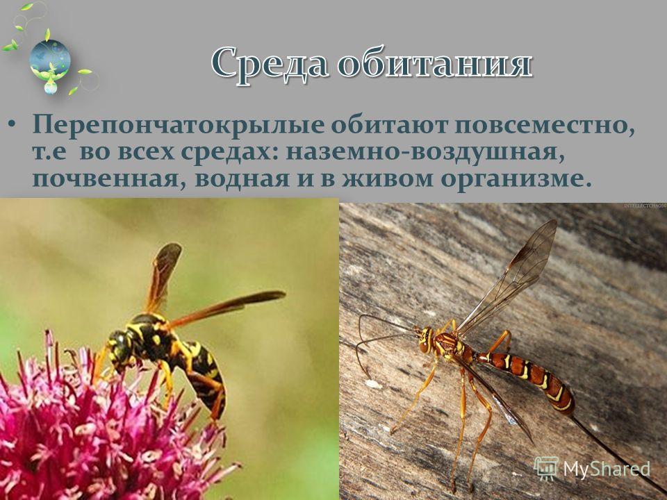 Перепончатокрылые обитают повсеместно, т.е во всех средах: наземно-воздушная, почвенная, водная и в живом организме.