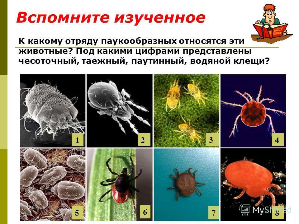 К какому отряду паукообразных относятся эти животные? Под какими цифрами представлены чесоточный, таежный, паутинный, водяной клещи? 1 1 234 5 6 78 Вспомните изученное