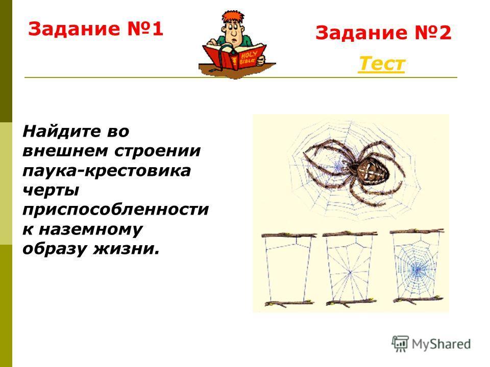 Задание 1 Тест Задание 2 Найдите во внешнем строении паука-крестовика черты приспособленности к наземному образу жизни.
