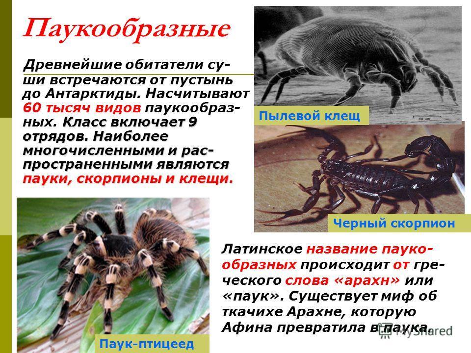 Паукообразные Класс включает 9 отрядов. Наиболее многочисленными и рас- пространенными являются пауки, скорпионы и клещи. Древнейшие обитатели су- ши встречаются от пустынь до Антарктиды. Насчитывают 60 тысяч видов паукообраз- ных. Класс включает 9 о