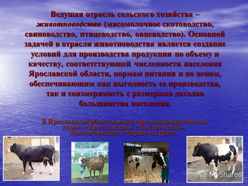 Ведущая отрасль сельского хозяйства – животноводство (мясомолочное скотоводство, свиноводство, птицеводство, овцеводство). Основной задачей в отрасли животноводства является создание условий для производства продукции по объему и качеству, соответств