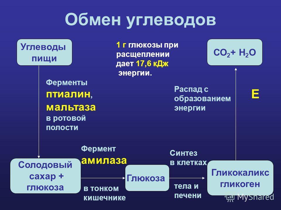 Обмен углеводов Углеводы пищи Солодовый сахар + глюкоза Глюкоза Гликокаликс гликоген СО 2 + Н 2 О Ферменты птиалин, мальтаза в ротовой полости Фермент амилаза в тонком кишечнике Синтез в клетках тела и печени Распад с образованием энергии 1 г глюкозы
