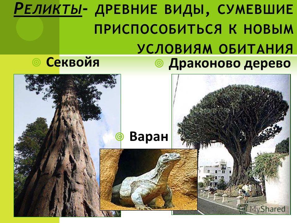 Р ЕЛИКТЫ - ДРЕВНИЕ ВИДЫ, СУМЕВШИЕ ПРИСПОСОБИТЬСЯ К НОВЫМ УСЛОВИЯМ ОБИТАНИЯ Секвойя Драконово дерево Варан
