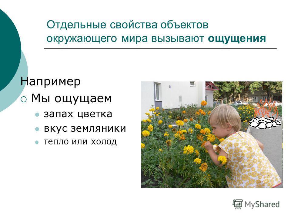 Отдельные свойства объектов окружающего мира вызывают ощущения Например Мы ощущаем запах цветка вкус земляники тепло или холод
