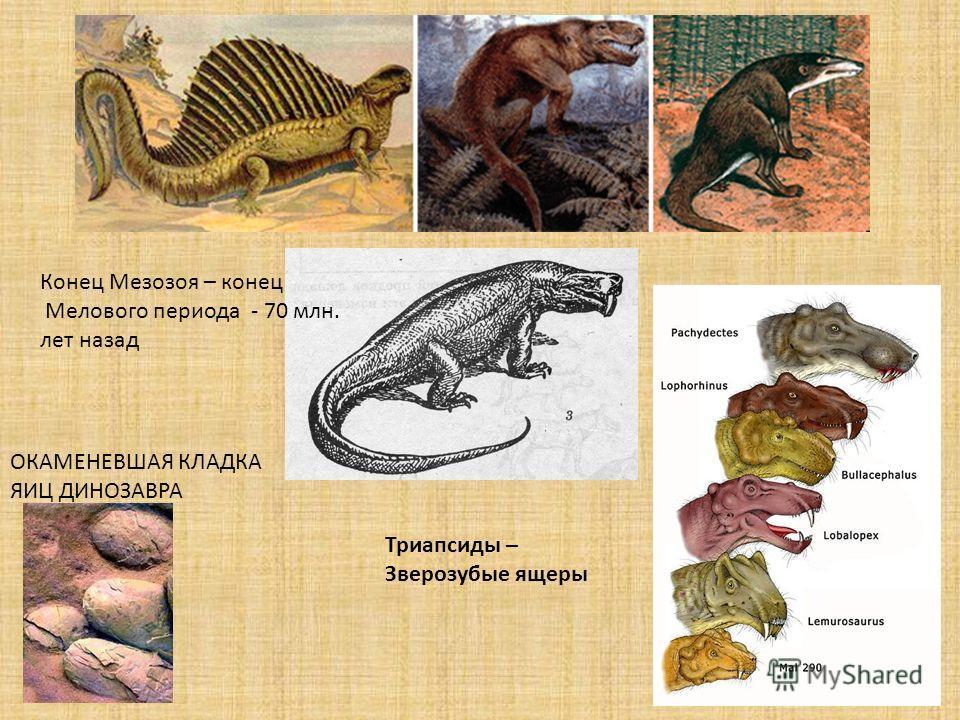 Триапсиды – Зверозубые ящеры ОКАМЕНЕВШАЯ КЛАДКА ЯИЦ ДИНОЗАВРА Конец Мезозоя – конец Мелового периода - 70 млн. лет назад