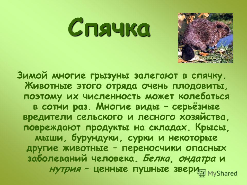 Зимой многие грызуны залегают в спячку. Животные этого отряда очень плодовиты, поэтому их численность может колебаться в сотни раз. Многие виды – серьёзные вредители сельского и лесного хозяйства, повреждают продукты на складах. Крысы, мыши, бурундук