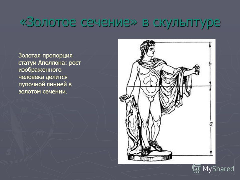 «Золотое сечение» в скульптуре Золотая пропорция статуи Аполлона: рост изображенного человека делится пупочной линией в золотом сечении.