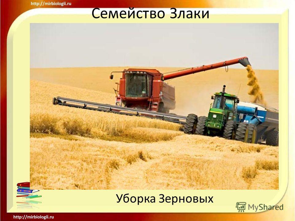 Семейство Злаки Уборка Зерновых