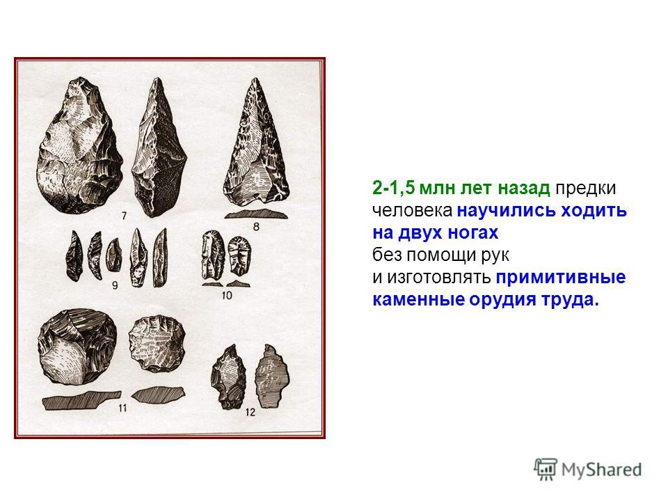 2-1,5 млн лет назад предки человека научились ходить на двух ногах без помощи рук и изготовлять примитивные каменные орудия труда.