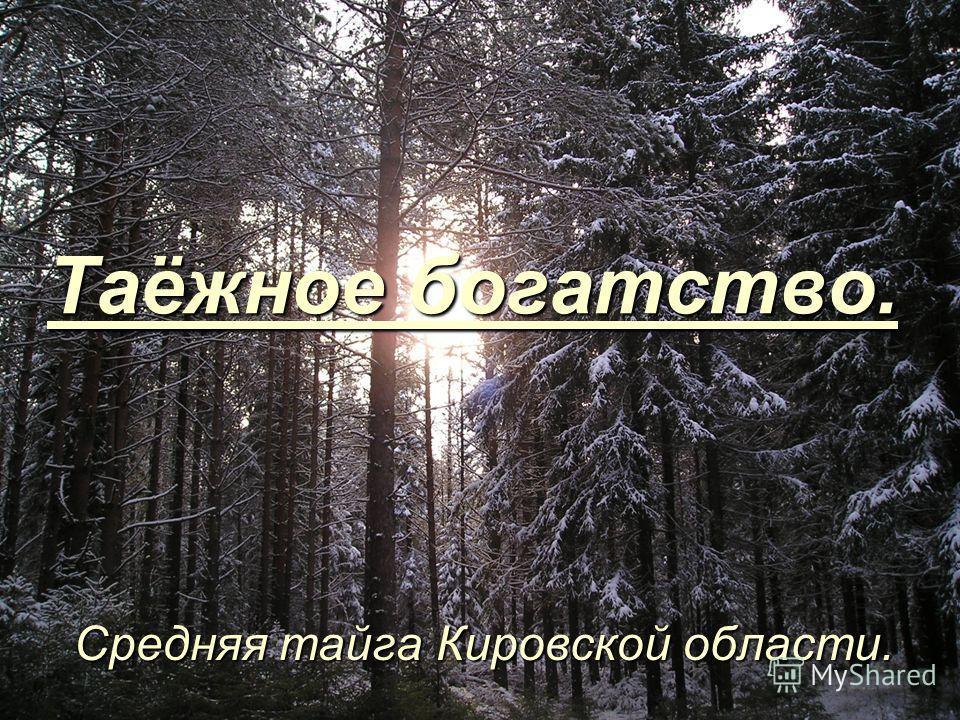 Таёжное богатство. Средняя тайга Кировской области.