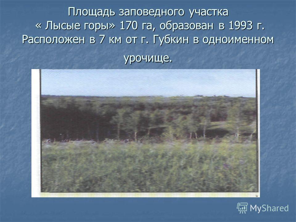 Площадь заповедного участка « Лысые горы» 170 га, образован в 1993 г. Расположен в 7 км от г. Губкин в одноименном урочище.